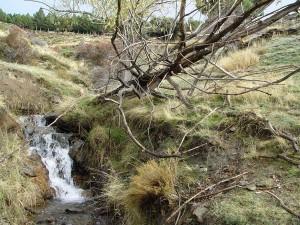 Circular Río Trevelez
