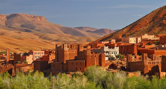 Viaje Birdwatching Marruecos