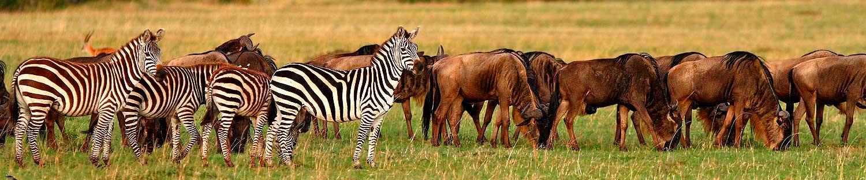 Fauna grandes herbivoros Kenia