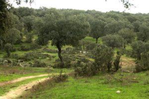 Puenet 1 mayo: Parque Natural de Montoro y Cardeña @ Montoro, Córdoba